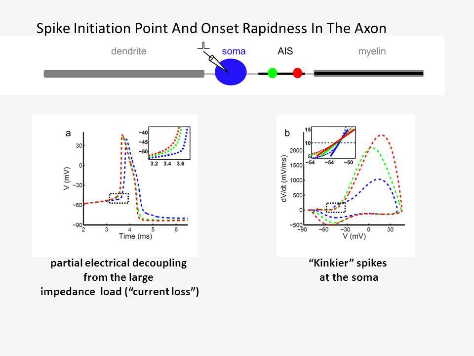 Spike Initiation Point And Onset Rapidness In The Axon partial electrical decoupling from the large impedance load ( current loss ) Kinkier spikes at the soma
