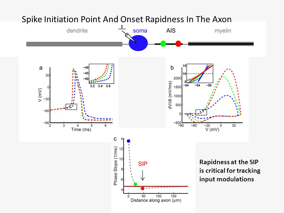 Dependence Of AP Onset Rapidness In The Axon On The Dendritic Load Same active properties