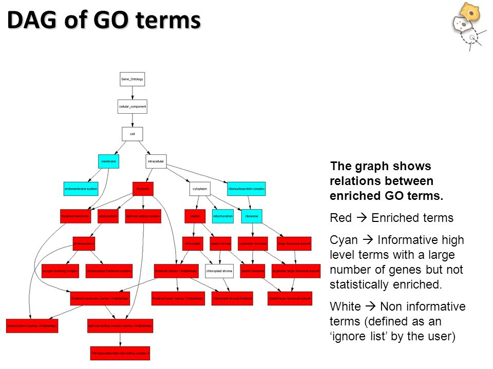DAG of GO terms The graph shows relations between enriched GO terms.