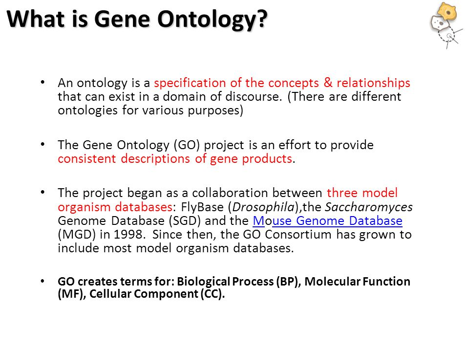 What is Gene Ontology.