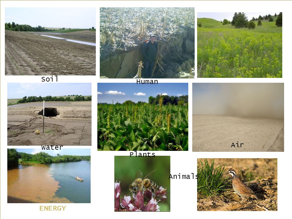 Soil Water Plants Air Animals Human ENERGY