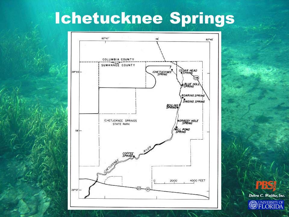 Debra C. Woithe, Inc. Ichetucknee Springs