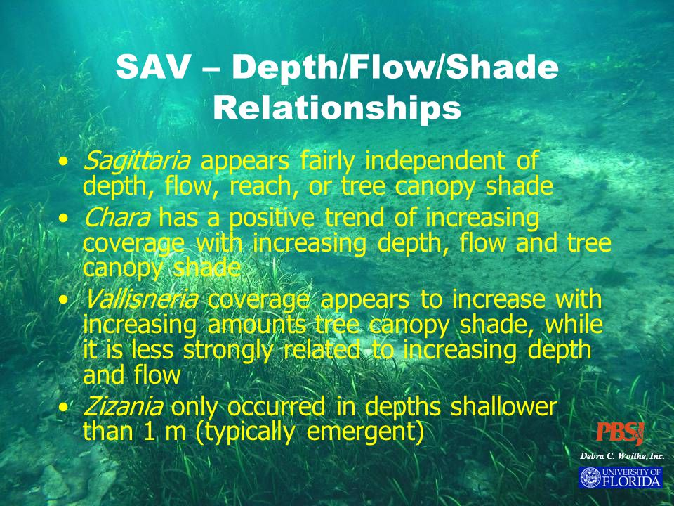 Debra C. Woithe, Inc. SAV – Depth/Flow/Shade Relationships Sagittaria appears fairly independent of depth, flow, reach, or tree canopy shade Chara has