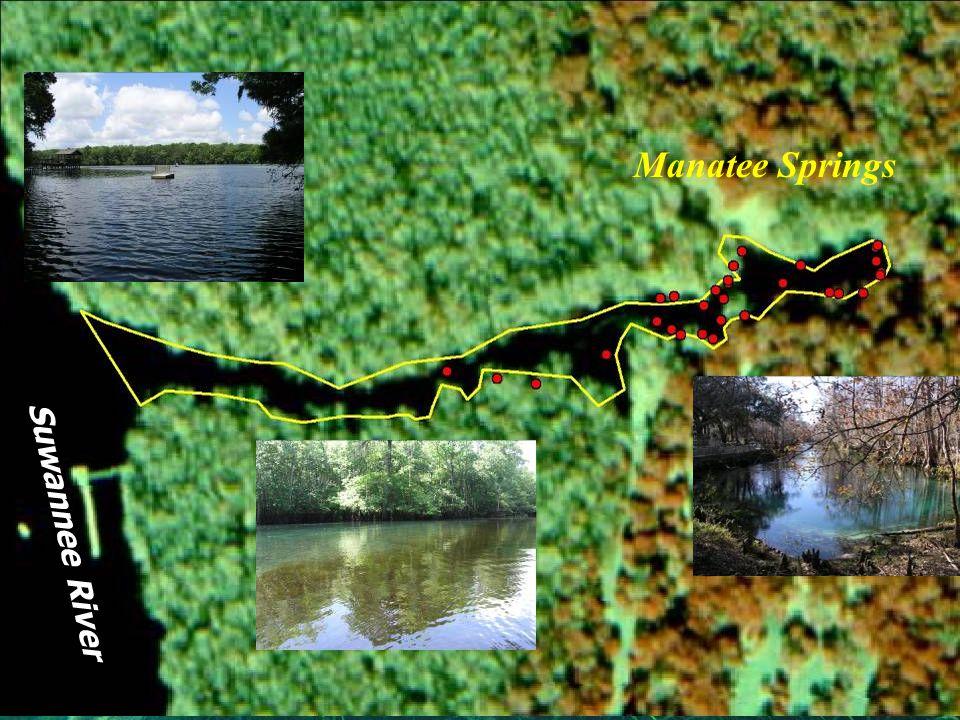 Debra C. Woithe, Inc. Suwannee River Manatee Springs