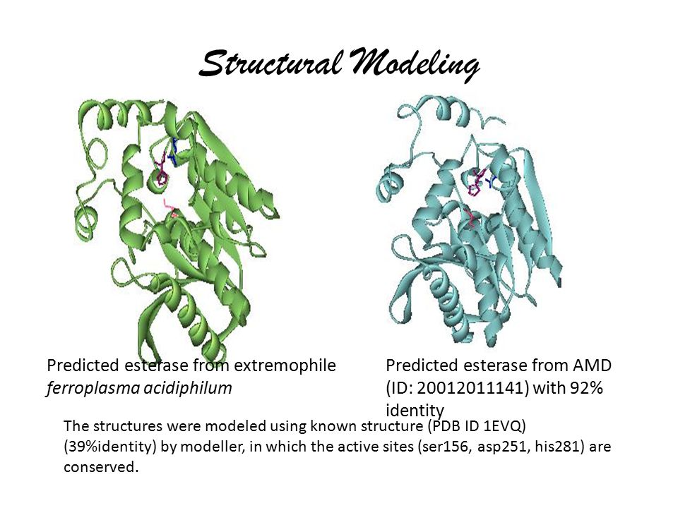The structures were modeled using known structure (PDB ID 1EVQ) (39%identity) by modeller, in which the active sites (ser156, asp251, his281) are cons