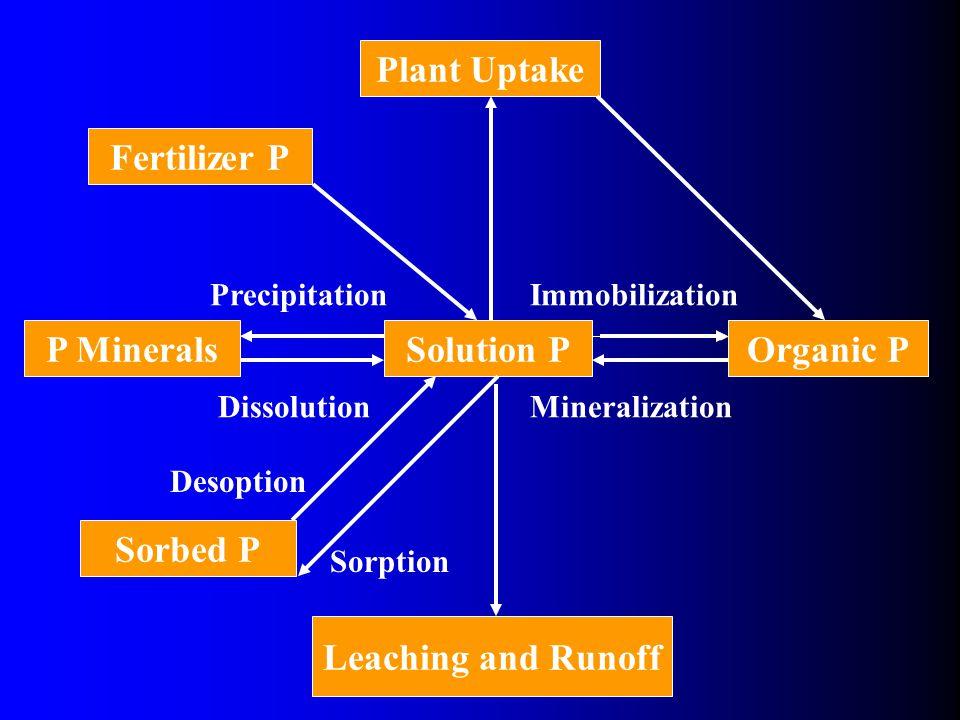 Sorbed P Organic PSolution PP Minerals Plant Uptake Fertilizer P Immobilization Mineralization Precipitation Dissolution Desoption Sorption Leaching and Runoff