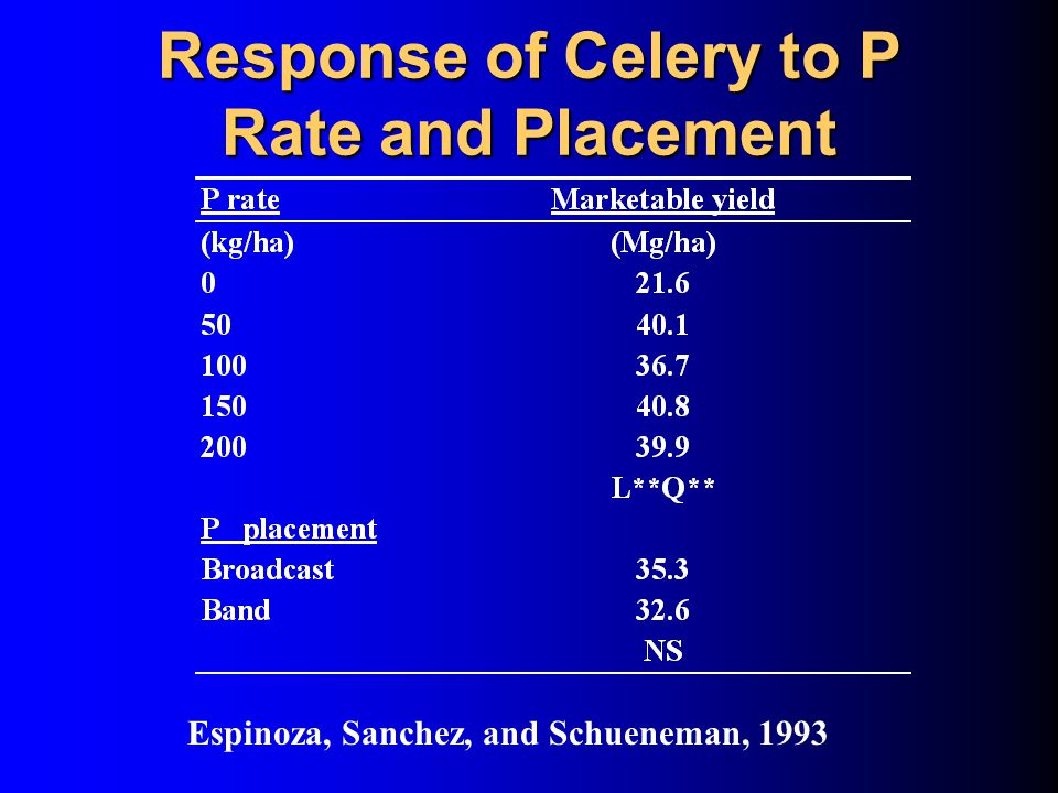 Response of Celery to P Rate and Placement Espinoza, Sanchez, and Schueneman, 1993