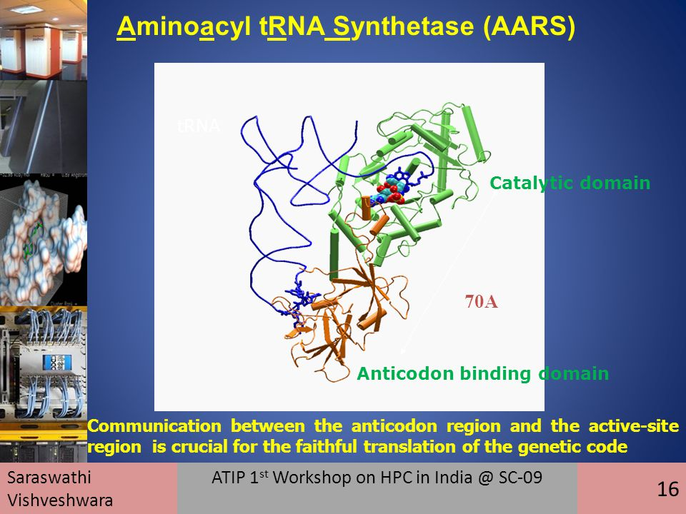 tRNA Catalytic domain Anticodon binding domain 70A Communication between the anticodon region and the active-site region is crucial for the faithful translation of the genetic code Saraswathi Vishveshwara ATIP 1 st Workshop on HPC in India @ SC-09 16 Aminoacyl tRNA Synthetase (AARS)