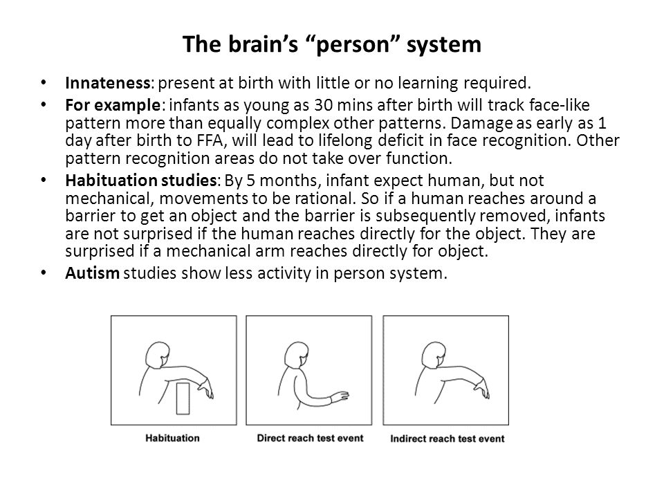 The brain's person system Innateness: present at birth with little or no learning required.