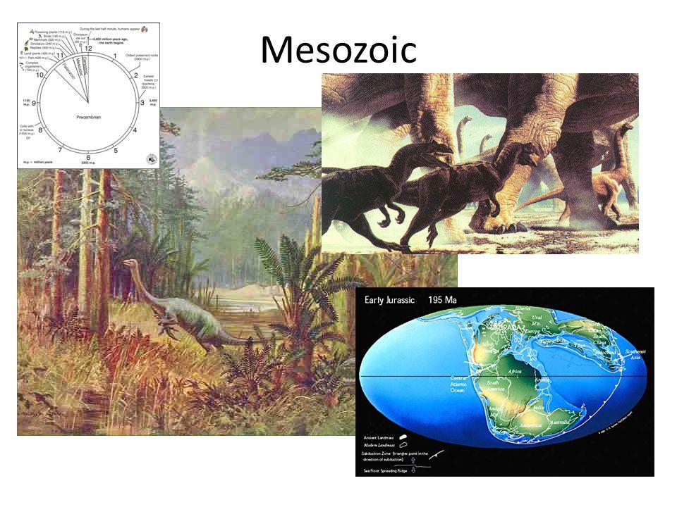 Mesozoic