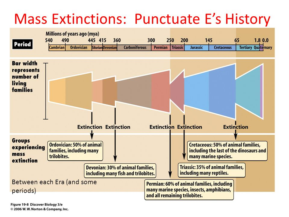 Mass Extinctions: Punctuate E's History Between each Era (and some periods)