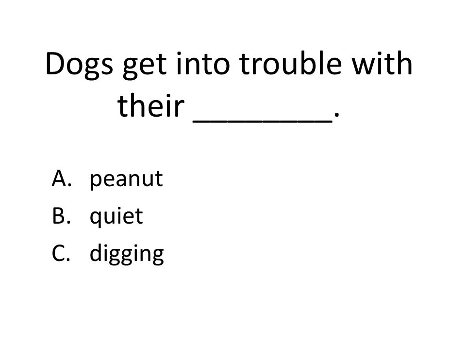 Dogs get into trouble with their ________. A.peanut B.quiet C.digging