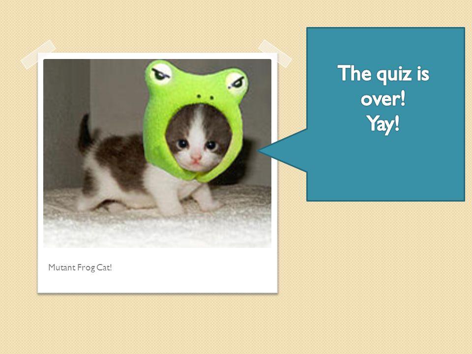 Mutant Frog Cat!