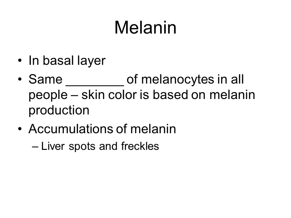 Melanin In basal layer Same ________ of melanocytes in all people – skin color is based on melanin production Accumulations of melanin –Liver spots and freckles