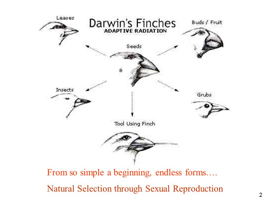 2 Natural Selection through Sexual Reproduction From so simple a beginning, endless forms….