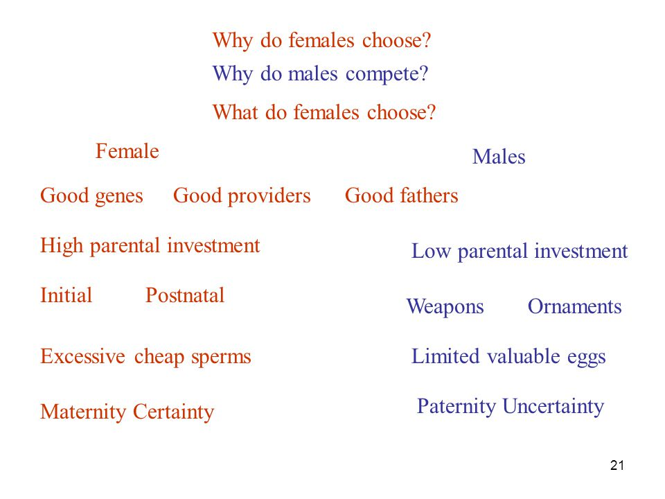 21 Why do females choose? High parental investment InitialPostnatal Why do males compete? Female Low parental investment WeaponsOrnaments Males Excess