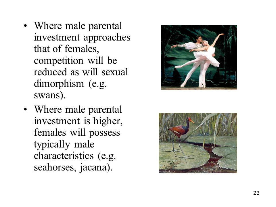 23 Where male parental investment approaches that of females, competition will be reduced as will sexual dimorphism (e.g. swans). Where male parental
