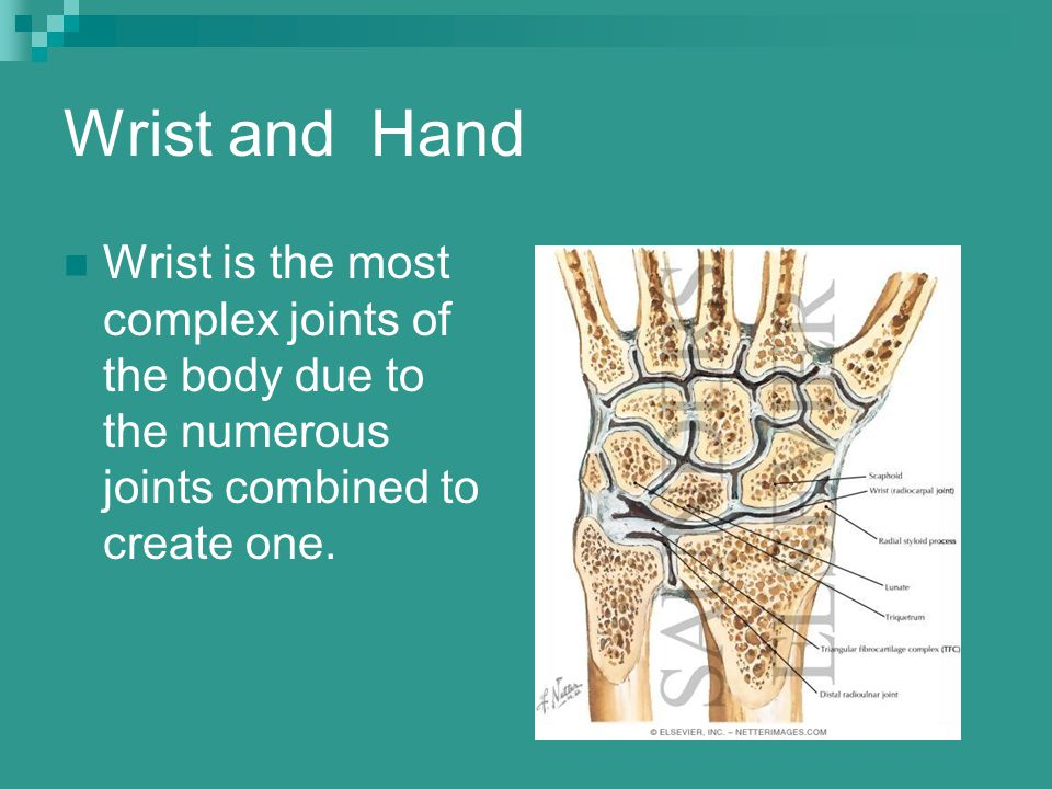 Wrist and Hand Wrist is the most complex joints of the body due to the numerous joints combined to create one.