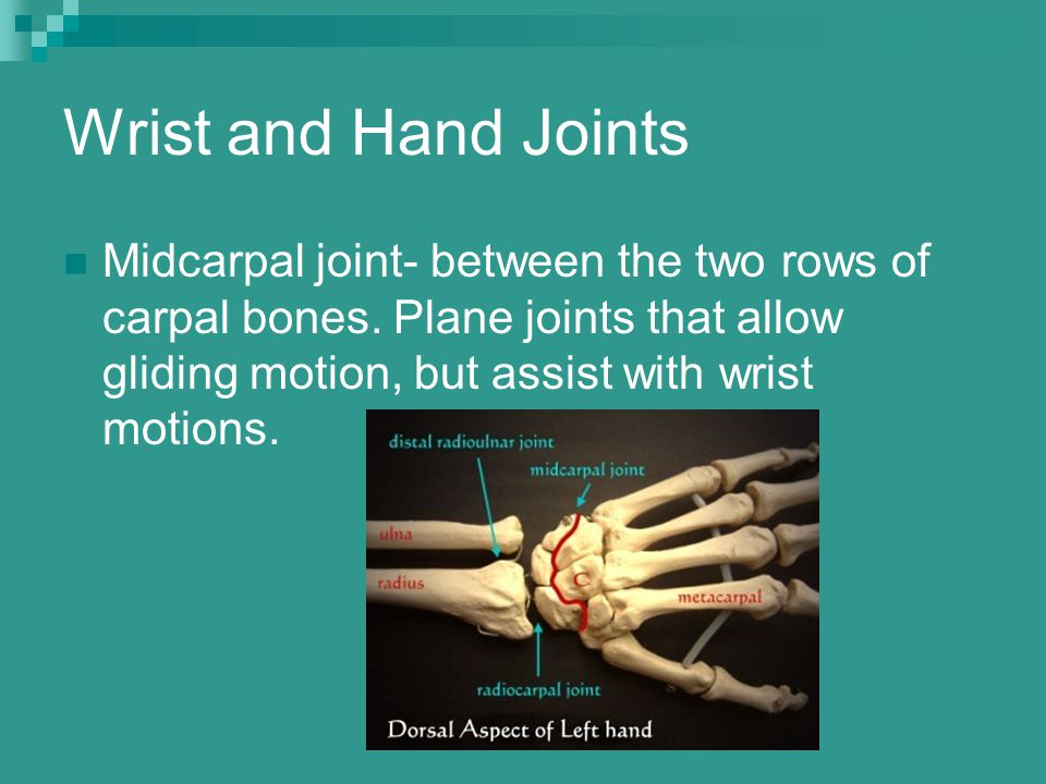 Wrist and Hand Joints Midcarpal joint- between the two rows of carpal bones. Plane joints that allow gliding motion, but assist with wrist motions.
