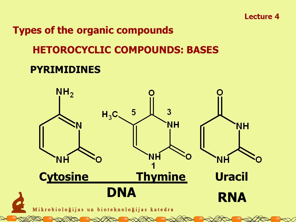 Lecture 4 Types of the organic compounds AMINO ACIDS: BASIC Histidine (His; H )