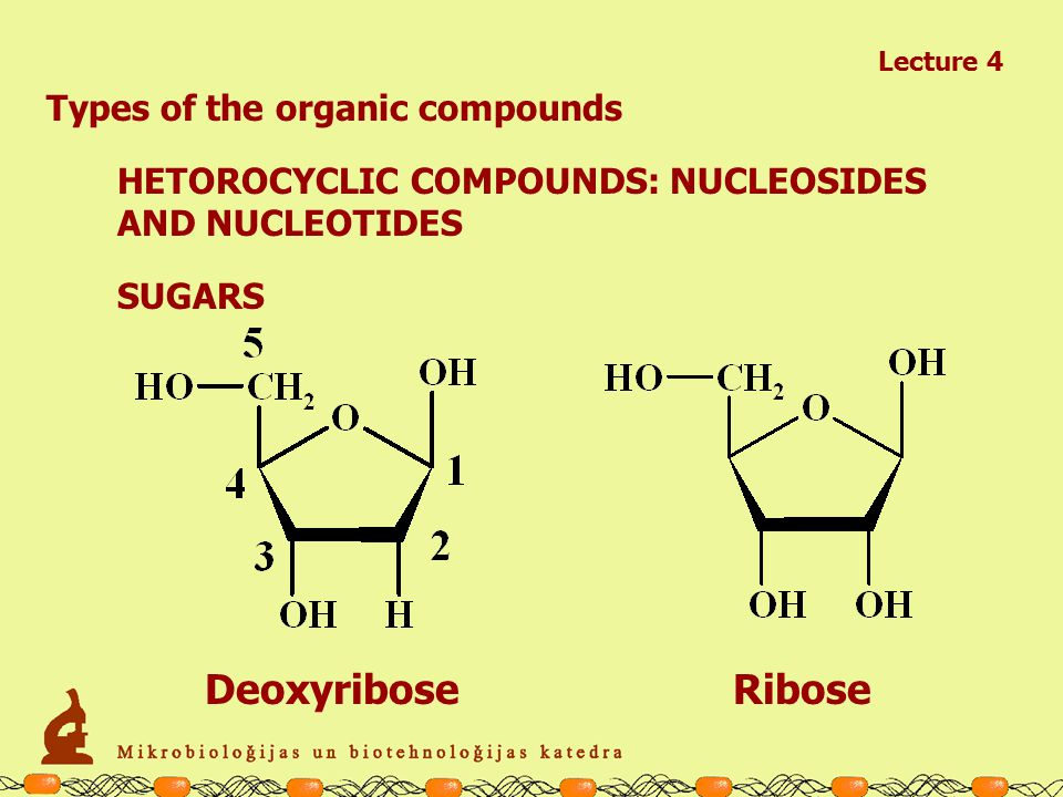Lecture 4 Types of the organic compounds HETOROCYCLIC COMPOUNDS: BASES PURINES Adenine Guanine