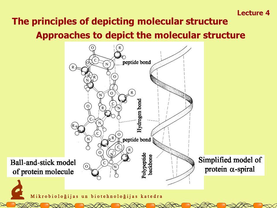 Lecture 4 Types of the organic compounds AMINO ACIDS: ACIDIC Asparaginic acid (Asp; D) Glutaminic acid (Glu; E)