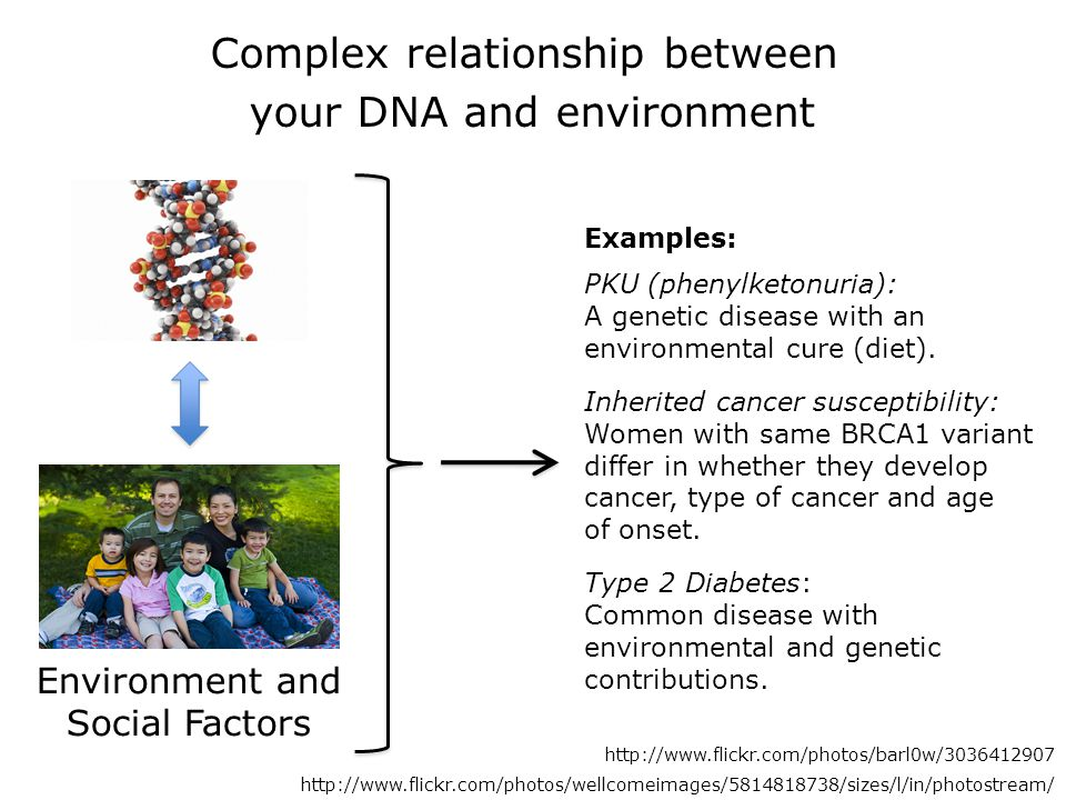 Complex relationship between your DNA and environment Environment and Social Factors http://www.flickr.com/photos/barl0w/3036412907 http://www.flickr.com/photos/wellcomeimages/5814818738/sizes/l/in/photostream/ Examples: PKU (phenylketonuria): A genetic disease with an environmental cure (diet).