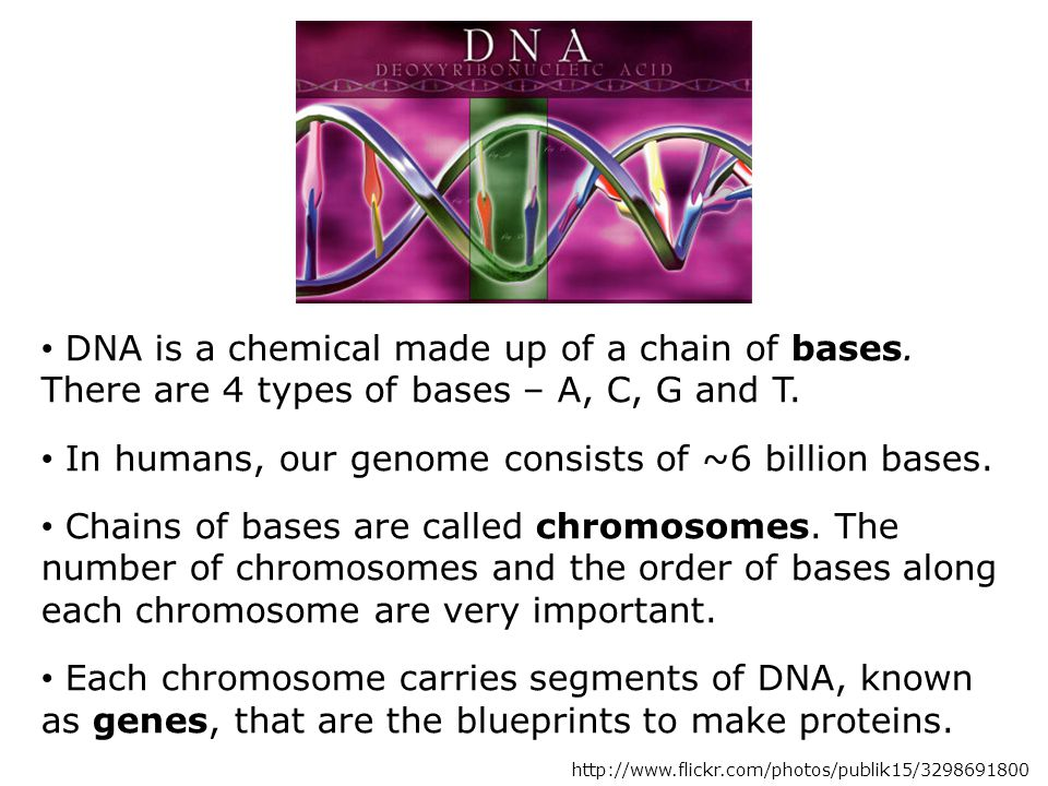DNA is a chemical made up of a chain of bases. There are 4 types of bases – A, C, G and T.