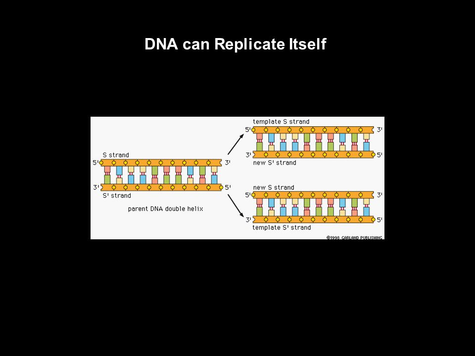 Chromosomes Contain Large Quantities of DNA