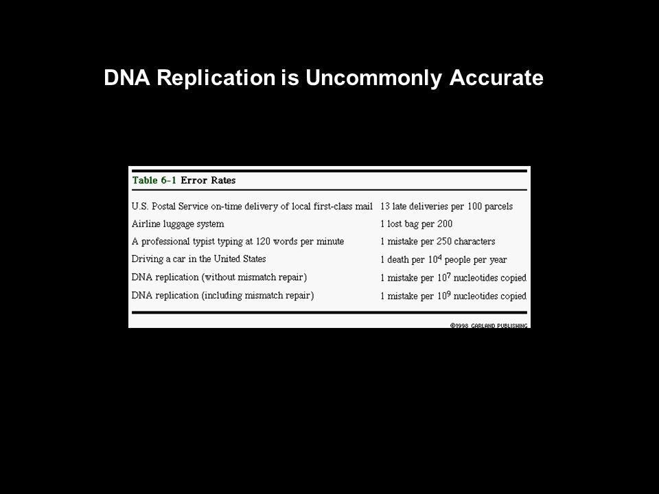 DNA can Replicate Itself