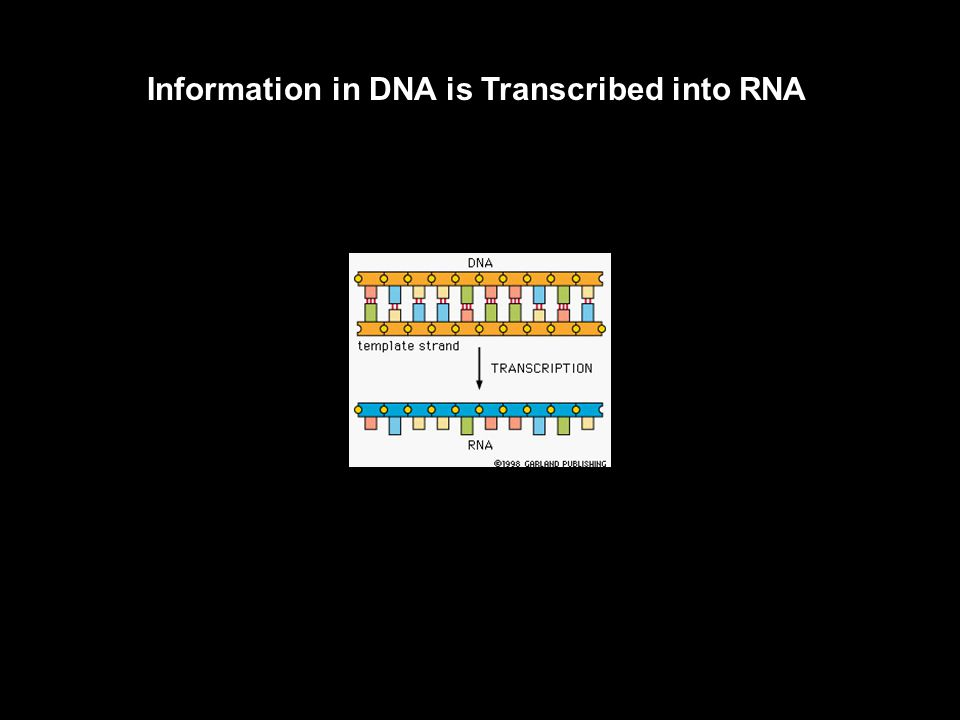 DNA Replication is Uncommonly Accurate