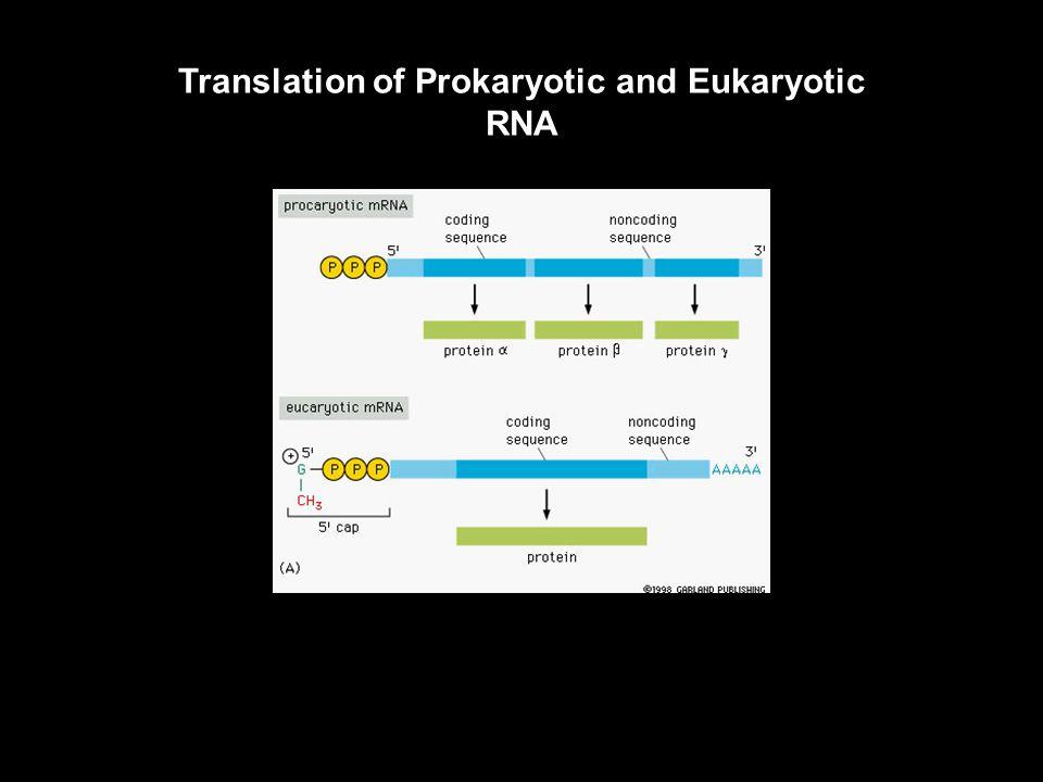 Gene Organization in Prokaryotes