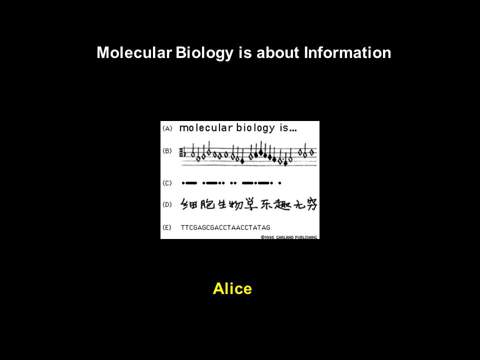 Essential Cell Biology : An Introduction to the Molecular Biology of the Cell by Bruce Alberts, Dennis Bray, Alexander Johnson, Julian Lewis, Peter Wa