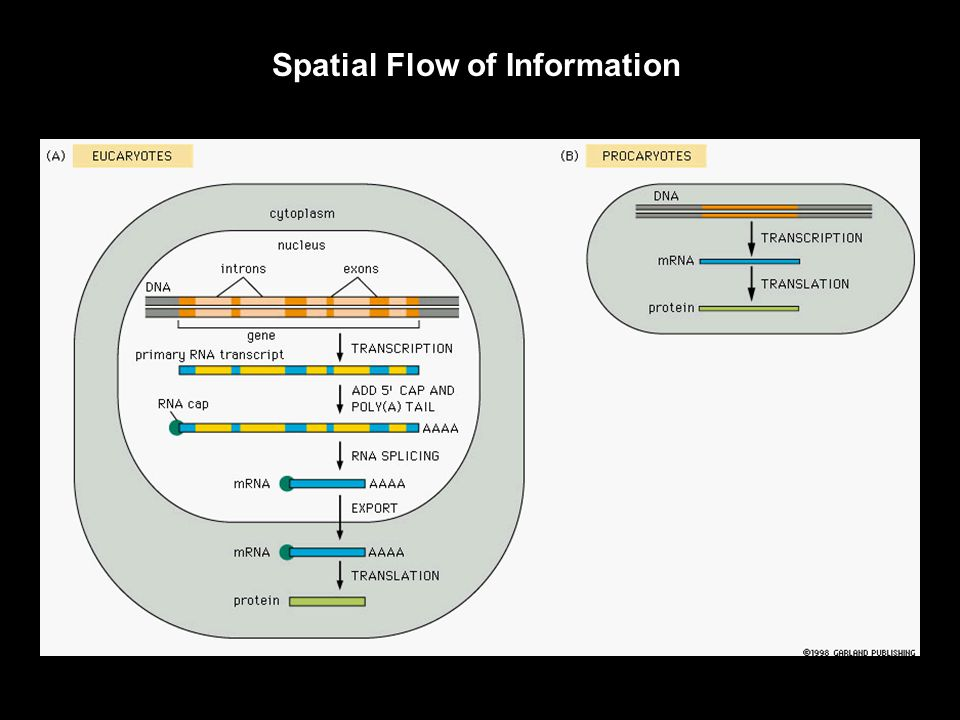 Information Flow within Cells