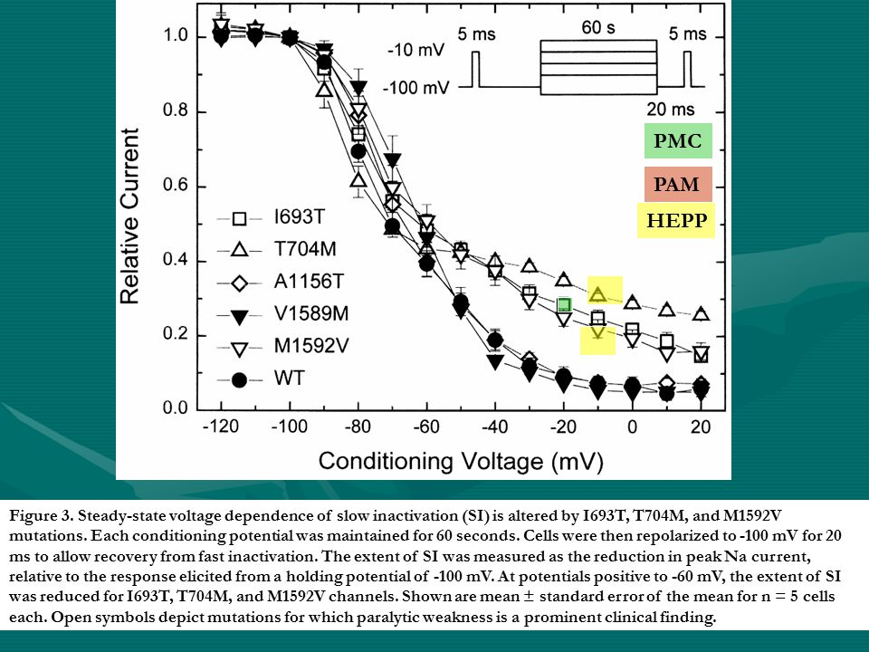 Figure 3. Steady-state voltage dependence of slow inactivation (SI) is altered by I693T, T704M, and M1592V mutations. Each conditioning potential was