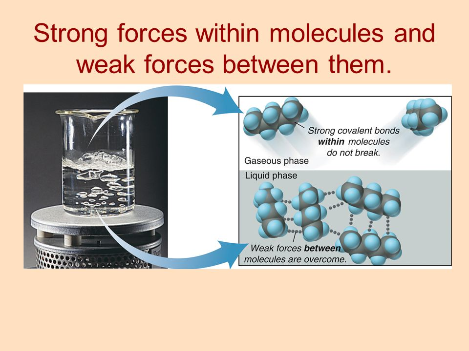 Strong forces within molecules and weak forces between them.
