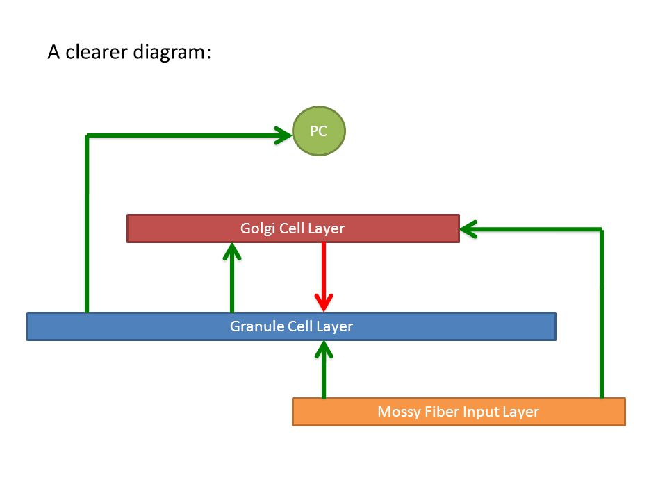A clearer diagram: Granule Cell Layer Mossy Fiber Input Layer Golgi Cell Layer PC