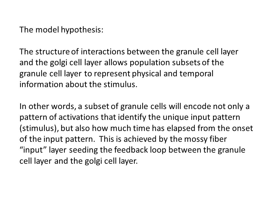 The model hypothesis: The structure of interactions between the granule cell layer and the golgi cell layer allows population subsets of the granule cell layer to represent physical and temporal information about the stimulus.