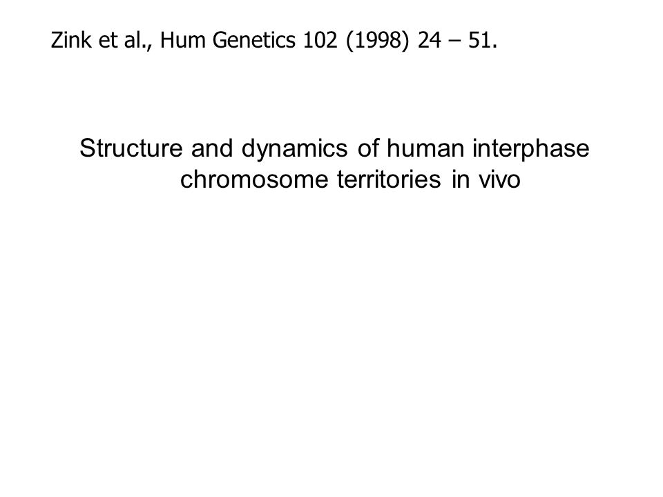 Conclusion 4 Motion of chromatin is in complex relation with gene expression (Fig 4)