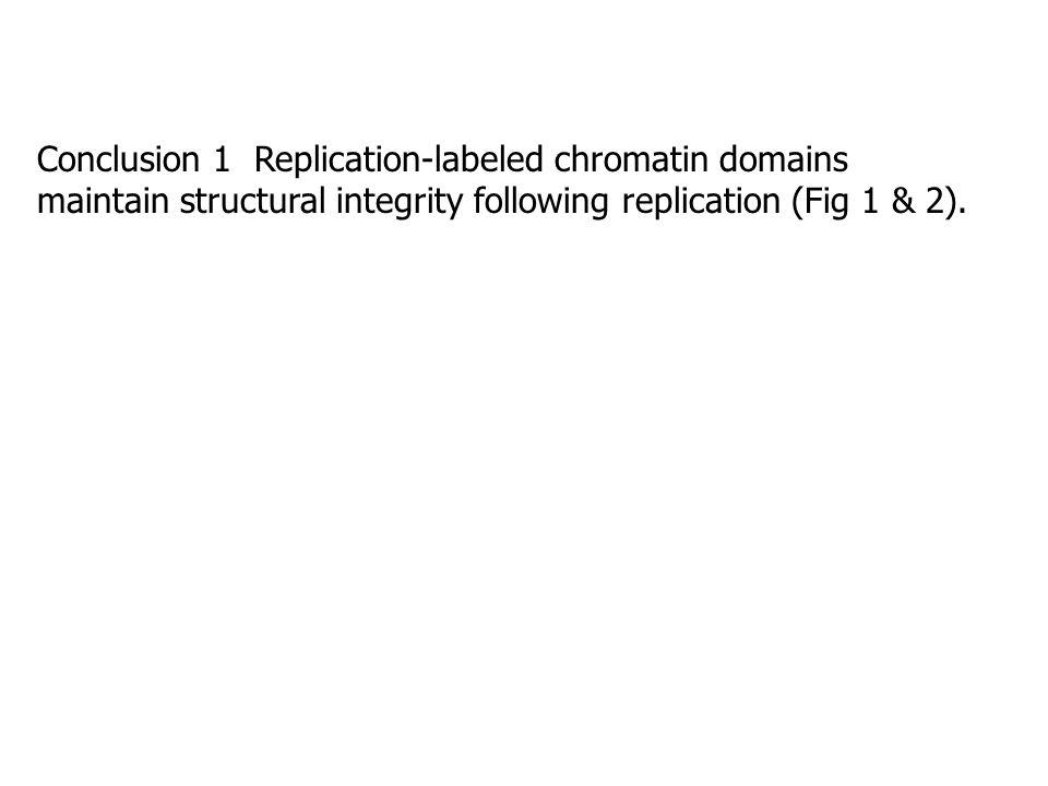 BrdU Pulse 25 min, then chase 150 min; BrdU green channel, cDNA red channel
