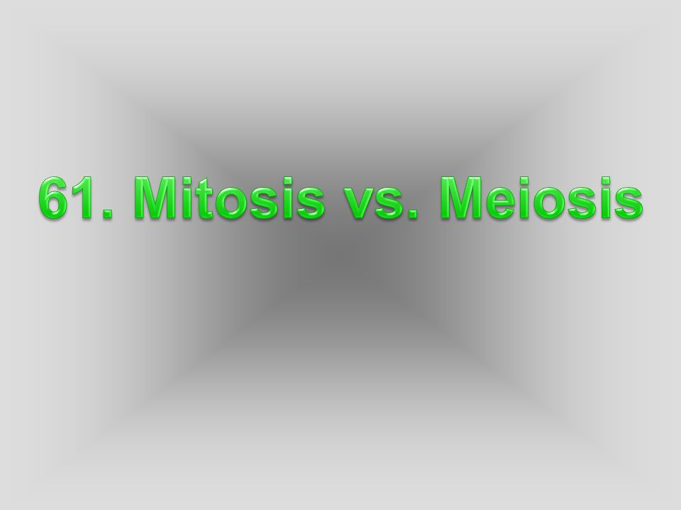 Mitosis: process of a somatic (body) cell dividing to produce an exact copy of itself