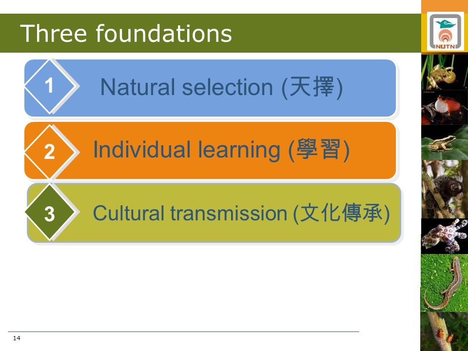 14 Three foundations Natural selection ( 天擇 ) 1 Individual learning ( 學習 ) 2 Cultural transmission ( 文化傳承 ) 3
