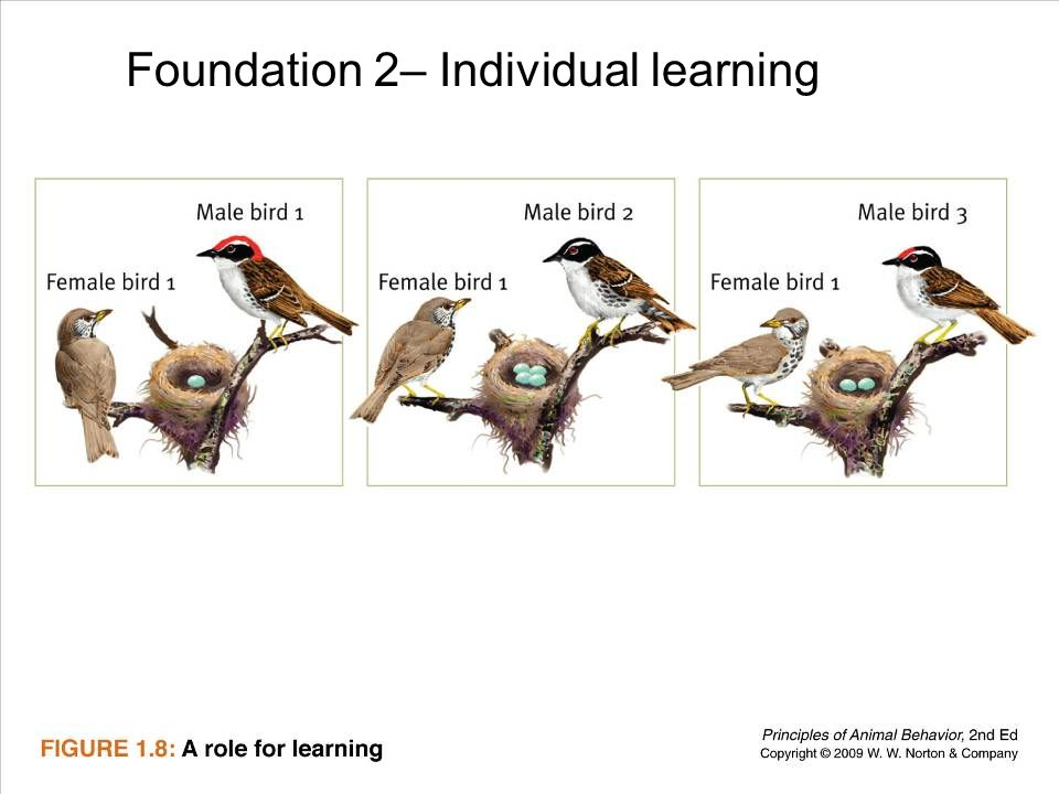 18 Foundation 2– Individual learning
