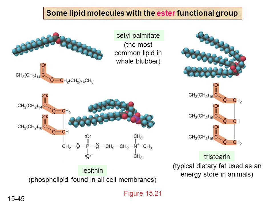 15-45 Figure 15.21 Some lipid molecules with the ester functional group cetyl palmitate (the most common lipid in whale blubber) lecithin (phospholipid found in all cell membranes) tristearin (typical dietary fat used as an energy store in animals)