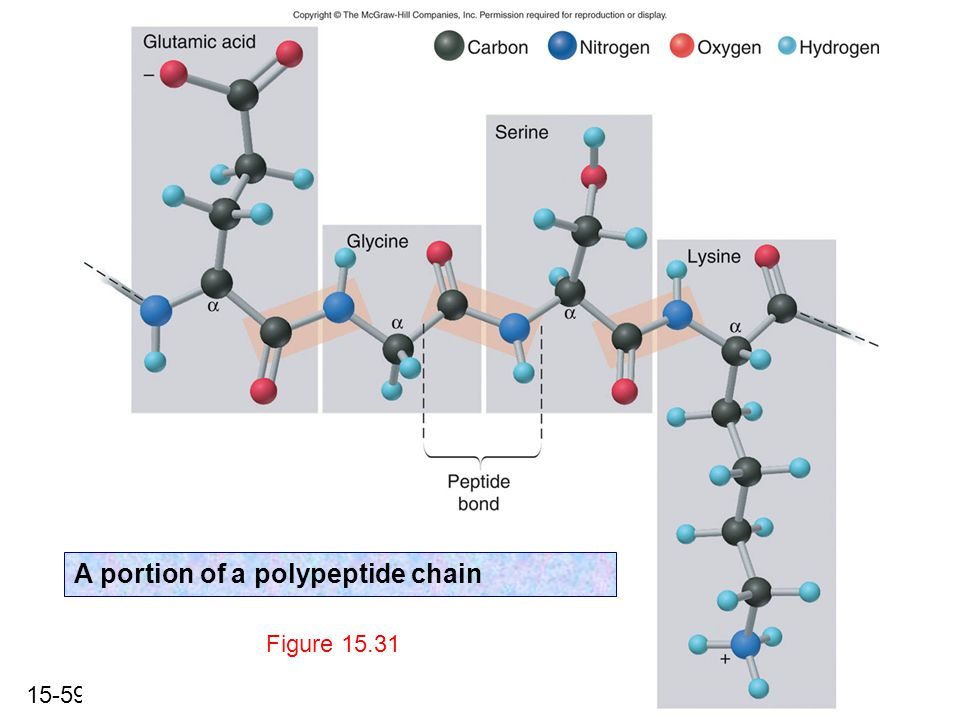 15-59 Figure 15.31 A portion of a polypeptide chain