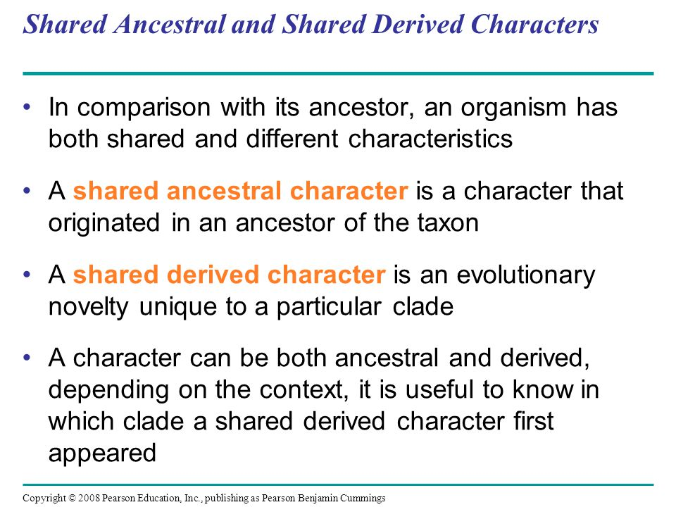 Copyright © 2008 Pearson Education, Inc., publishing as Pearson Benjamin Cummings Shared Ancestral and Shared Derived Characters In comparison with it