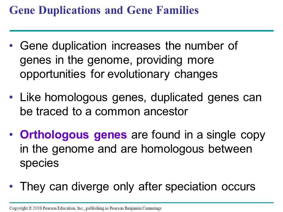 Copyright © 2008 Pearson Education, Inc., publishing as Pearson Benjamin Cummings Gene Duplications and Gene Families Gene duplication increases the n