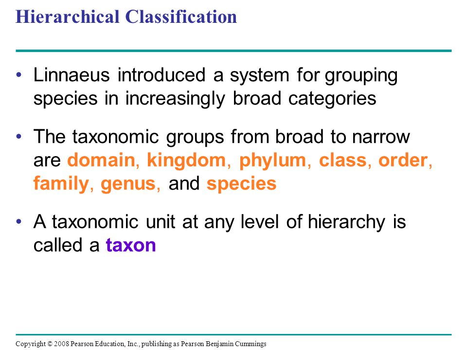 Copyright © 2008 Pearson Education, Inc., publishing as Pearson Benjamin Cummings Hierarchical Classification Linnaeus introduced a system for groupin