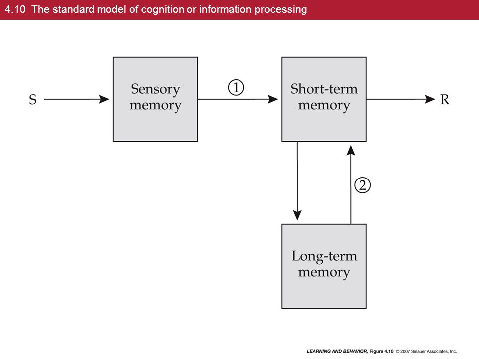 4.10 The standard model of cognition or information processing