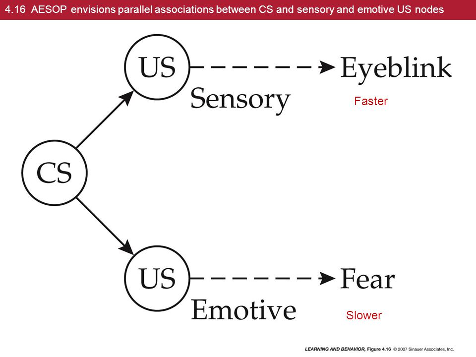 4.16 AESOP envisions parallel associations between CS and sensory and emotive US nodes Faster Slower